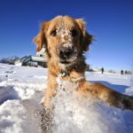 Cane e neve: come comportarsi